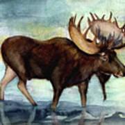 Moose Reflections Art Print