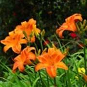 More Orange Daylilies Art Print