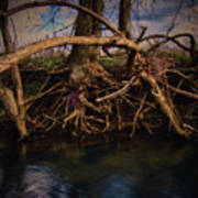 More Roots In Creek Art Print