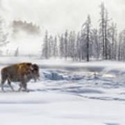 Morning Bison 4  7912-4 Art Print