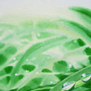 Morning Dew Drops Print by Irina Sztukowski