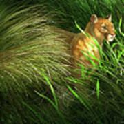 Morning Dew - Florida Panther Art Print