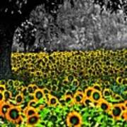 Morning Doves And The Sunflower Field Art Print