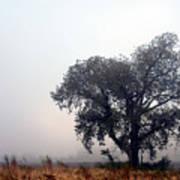 Morning Fog - The Delta Art Print