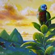 Morning Glory - St. Lucia Parrots Art Print