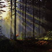 Morning Glow In The Forest Art Print