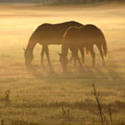 Morning Grazing Art Print