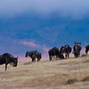 Morning In Ngorongoro Crater Art Print