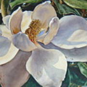 Morning Magnolia Art Print