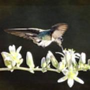 Morning Nectar Flyby  Art Print