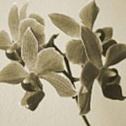 Morning Orchid Art Print by Ben and Raisa Gertsberg