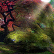 Morning Sun Rays On Old Japanese Maple Tree In Fall Art Print
