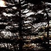 Morning Sunlight Through The Pines Art Print