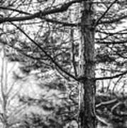 Morning Tree Art Print