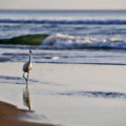 Morning Walk At Ormond Beach Art Print