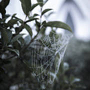 Morning Web With Dew Art Print