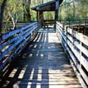Morris Bridge Boardwalk Art Print