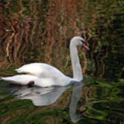 Mosaic Curious Swan  Art Print