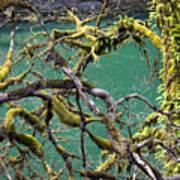 Moss And Trees Art Print