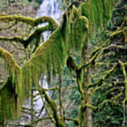 Moss At Munson Creek Art Print