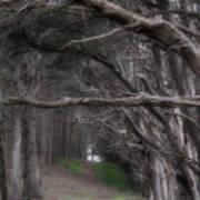 Moss Beach Trees 4191 Art Print