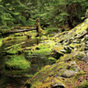 Moss By The Stream Art Print