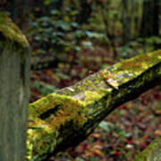 Moss Covered Fence Art Print