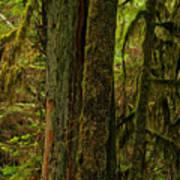 Moss Covered Giant Art Print