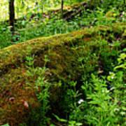Moss Covered Log 2 Art Print