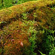 Moss Covered Log Art Print