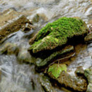Moss Covered Rock Art Print