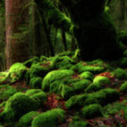Moss Covered Rocks And Tree Yosemite Np California Art Print