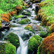 Moss Covered Stream Art Print