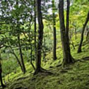 Moss Forest - Ginkakuji Temple - Japan Art Print