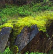 Moss On Rocks Art Print