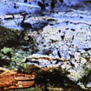 Moss On Wood Art Print