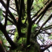 Moss Tree Art Print