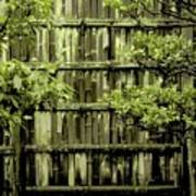 Mossy Bamboo Fence - Digital Art Art Print