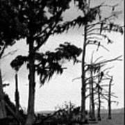 Mossy Beach Trees Art Print