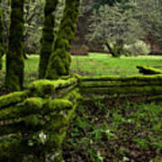 Mossy Fence 2 Art Print by Bob Christopher