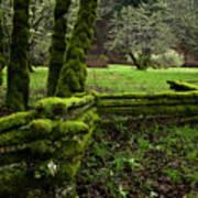 Mossy Fence 2 Art Print