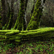 Mossy Fence 3 Print by Bob Christopher