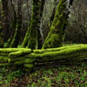 Mossy Fence 3 Art Print
