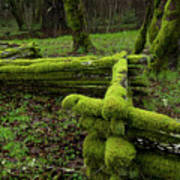Mossy Fence 4 Art Print by Bob Christopher