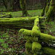 Mossy Fence 4 Art Print