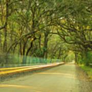 Mossy Oaks Canopy In South Carolina Art Print