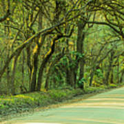 Mossy Oaks Canopy Panorama Art Print