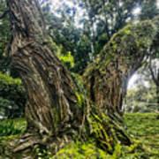 Mossy Old Tree Art Print