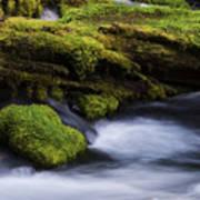 Mossy Rocks Oregon 3 Art Print