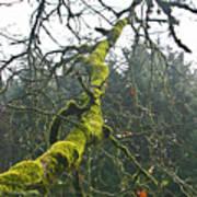 Mossy Tree Branch Art Print